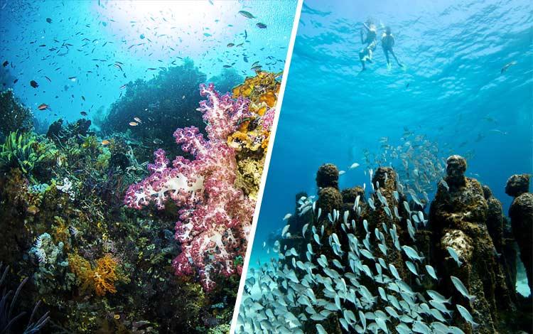 10 Destinasi Dengan Pemandangan Bawah Laut Terindah di Dunia